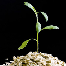 Decorative image: sprouting seedling